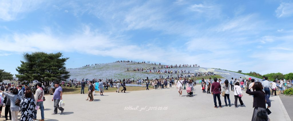 Nemophila Hill