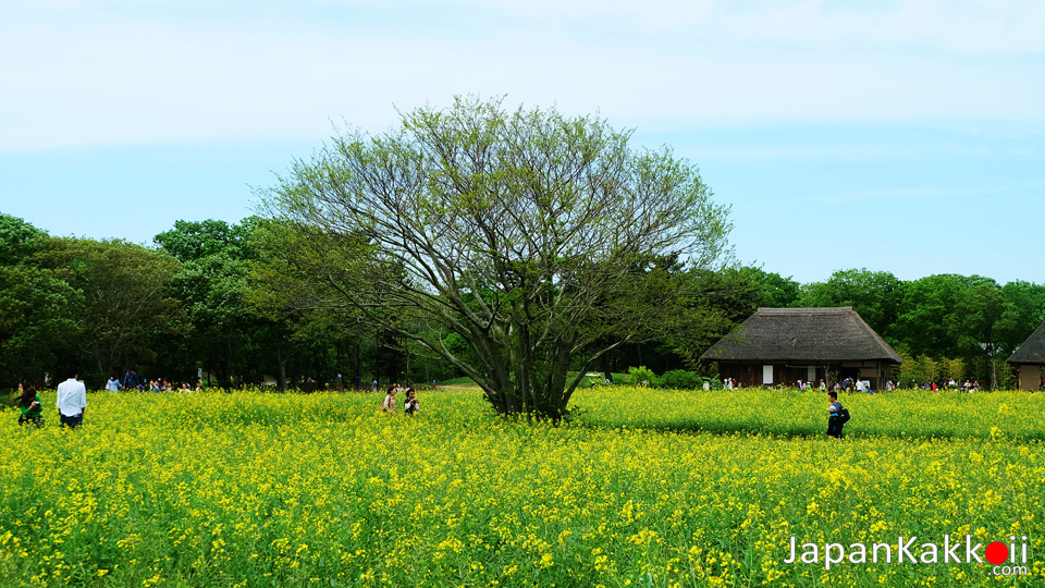 Hitachi Seaside Park Ibaraki