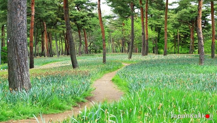 Tulip-park