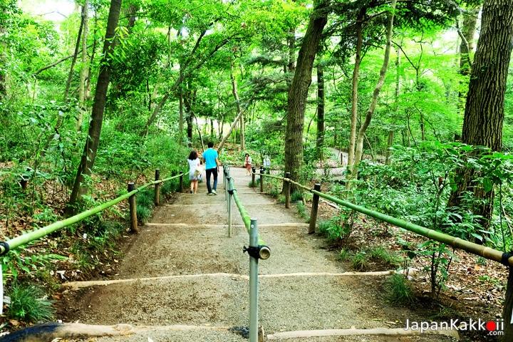 บันไดทางเดินในสวน