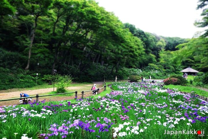 สวนดอกไอริส