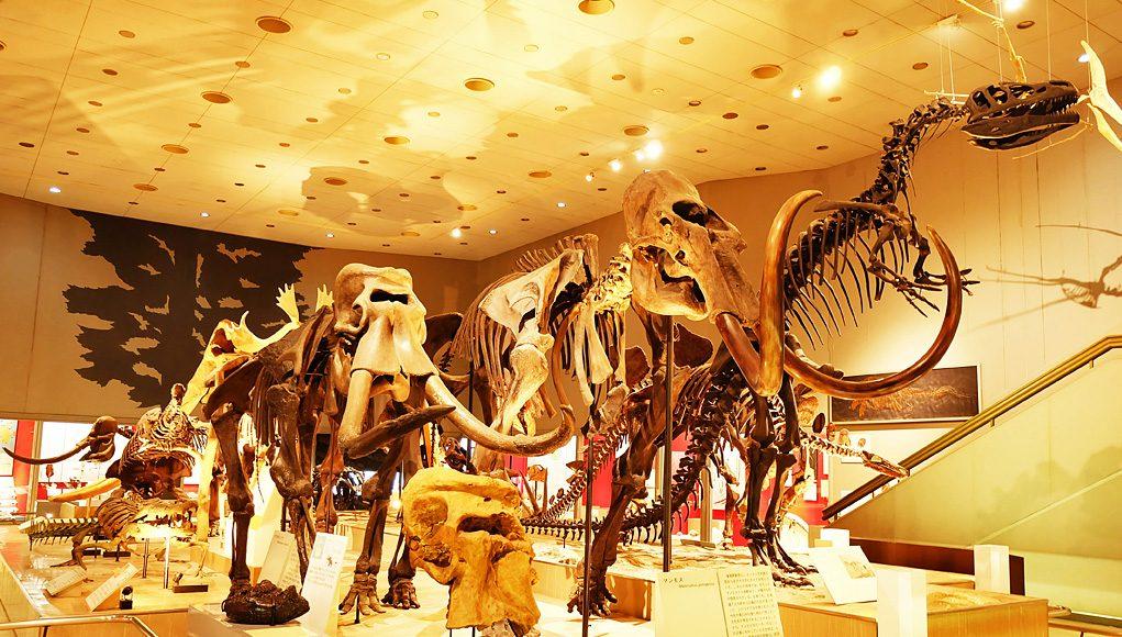 Osaka Museum Of Natural History