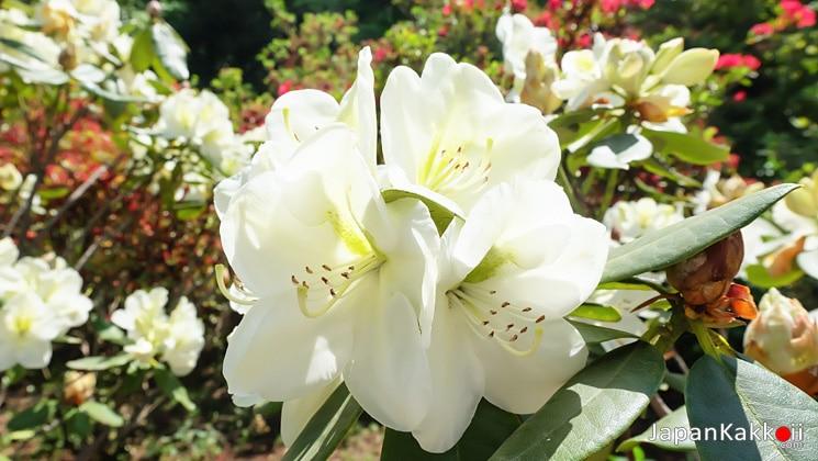 ดอกไม้ในสวน