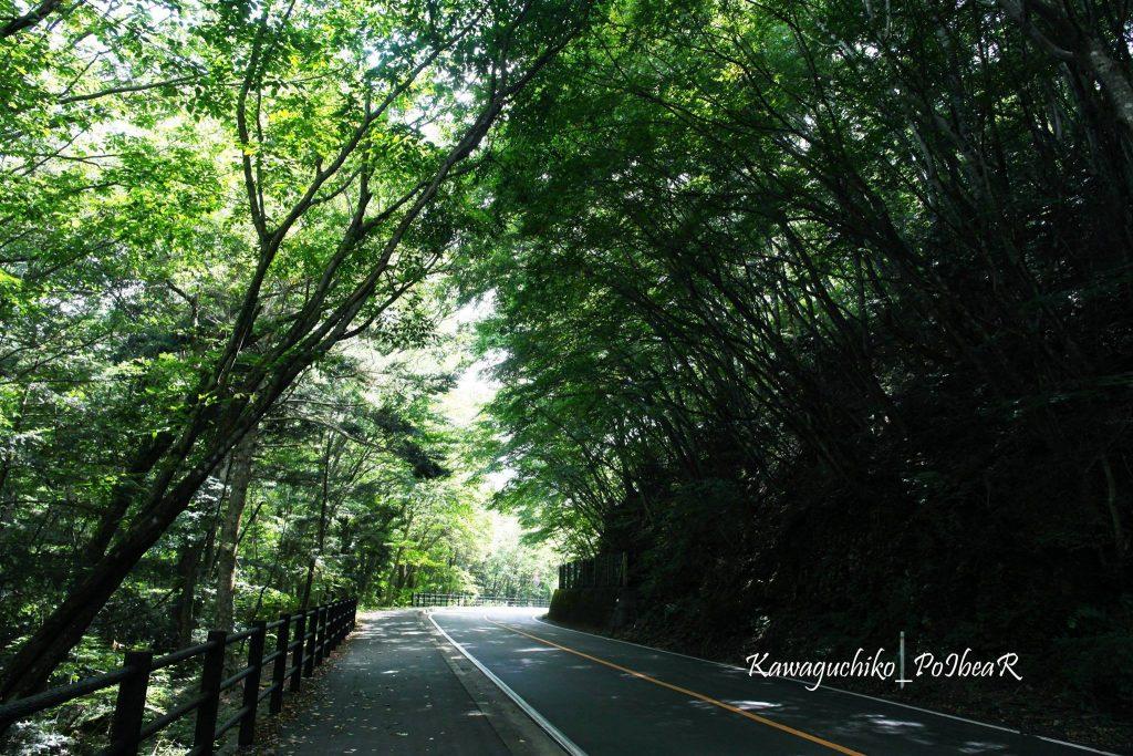 ทางเดินรอบๆ ทะเลสาบไซโกะ