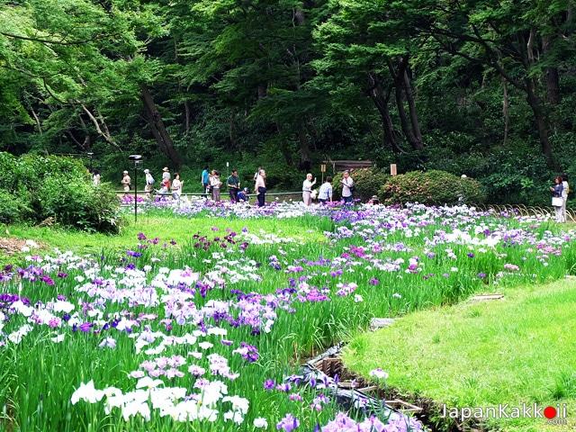 Meiji Shrine Inner Garden (Meiji Jungu Gyoen)