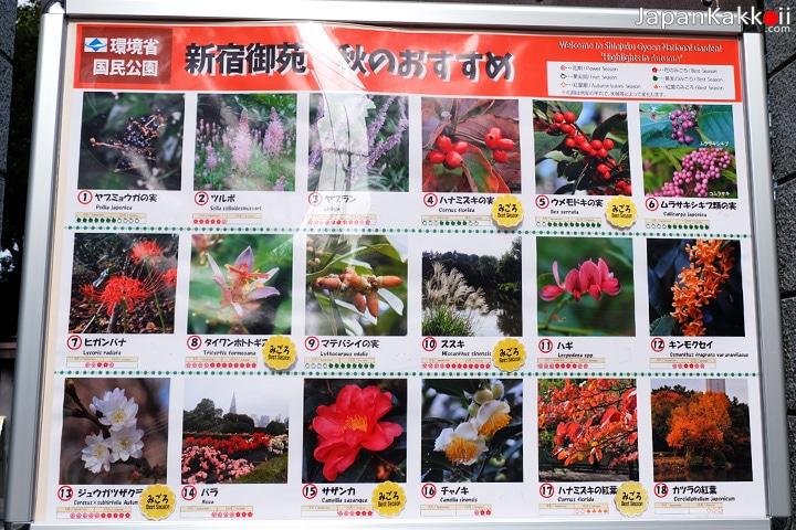 ดอกไม้ในฤดูใบไม้ร่วง