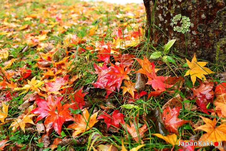 ใบไม้เปลี่ยนสี