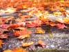 ใบไม้เปลี่ยนสีที่นิกโก้