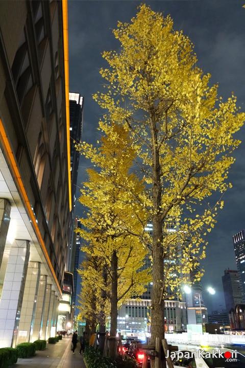 ใบไม้เปลี่ยนสีหน้า Marunouchi Building
