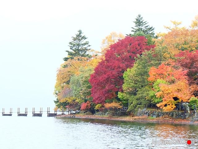 ใบไม้เปลี่ยนสีในฤดูใบไม้ร่วง
