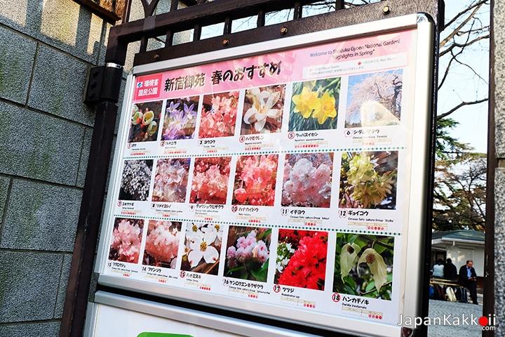ดอกไม้ที่จะบานในฤดูใบไม้ผลิ