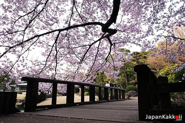 สะพานไม้ในสวน