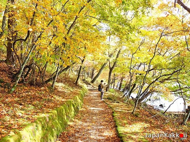 ใบไม้เปลี่ยนสีที่นิกโก้ (Nikko)