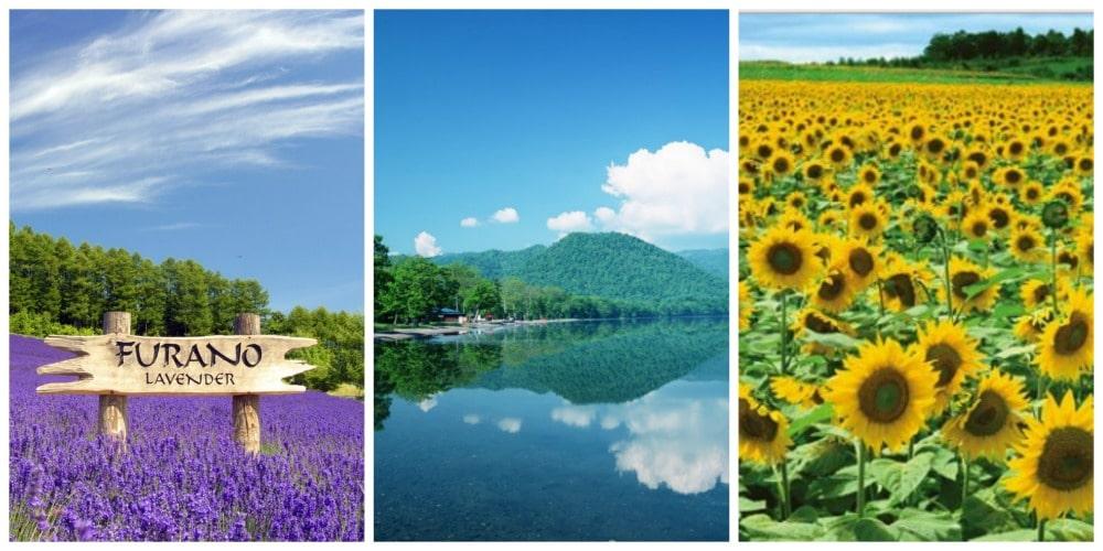 ฤดูร้อนในฮอกไกโด