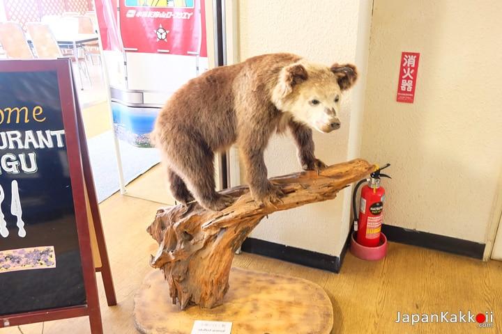 หมีน้อย