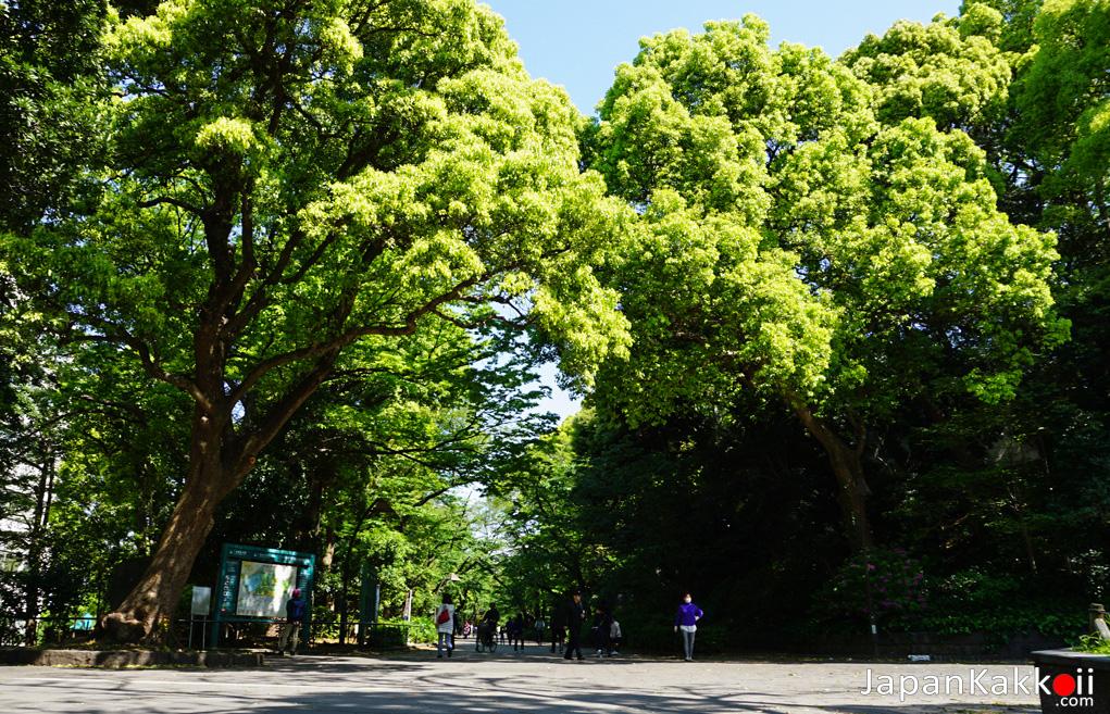 สวนอุเอโนะ (Ueno Park)