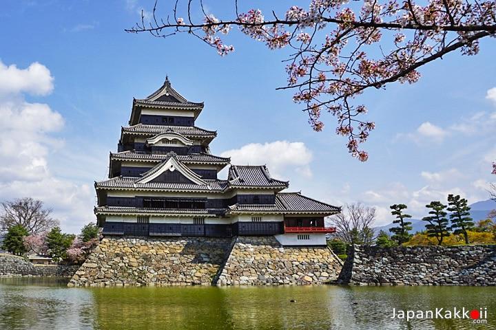 ซากุระปราสาทมัตสึโมโต้ (Sakura at Matsumoto Castle)