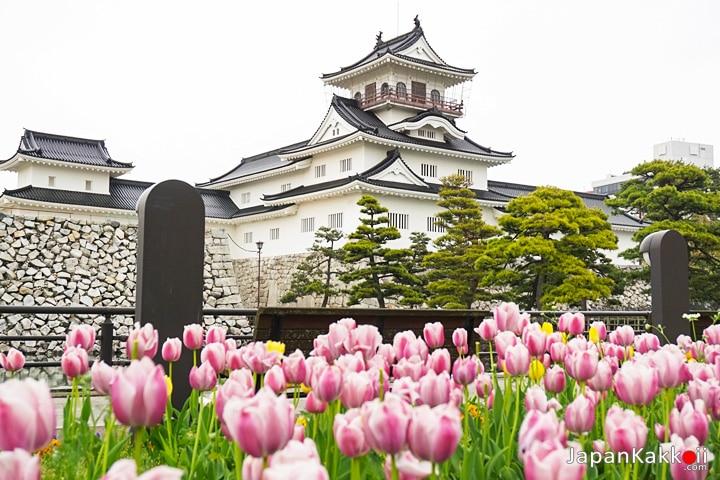 ปราสาทโทยาม่า (Toyama Castle)