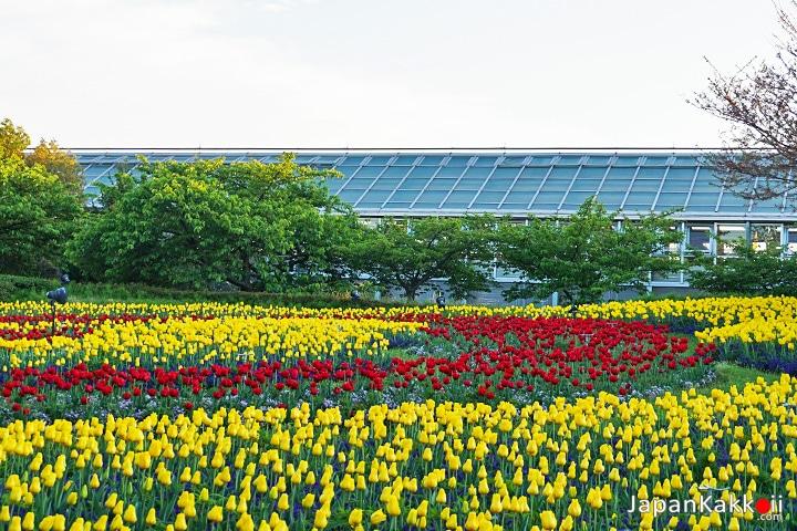 สวนดอกทิวลิป