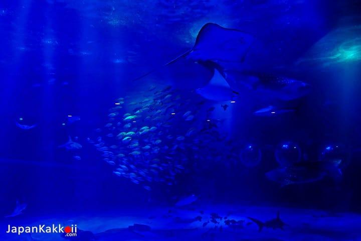 ปลาต่างๆ