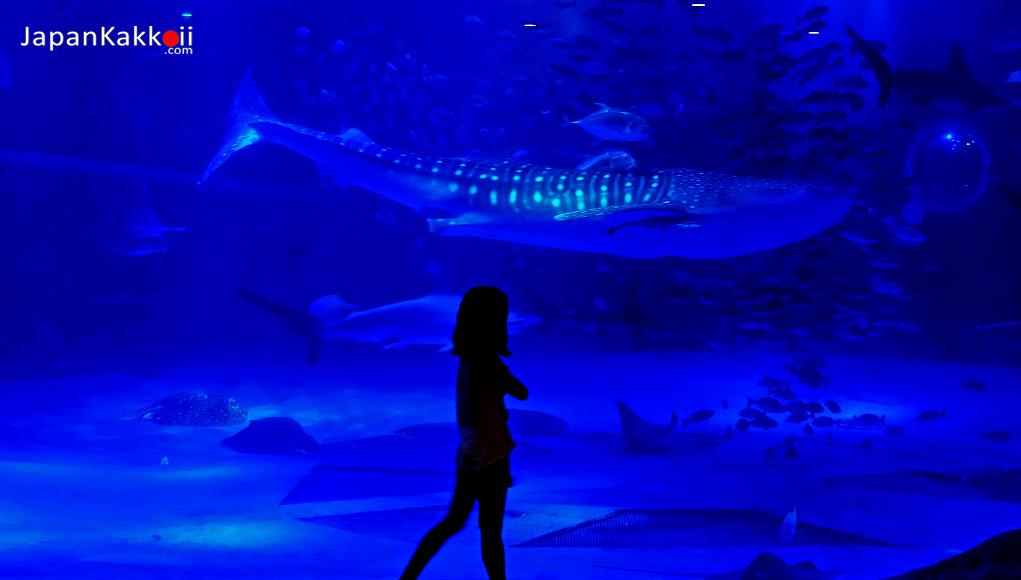 Notojima Aquarium Ishikawa
