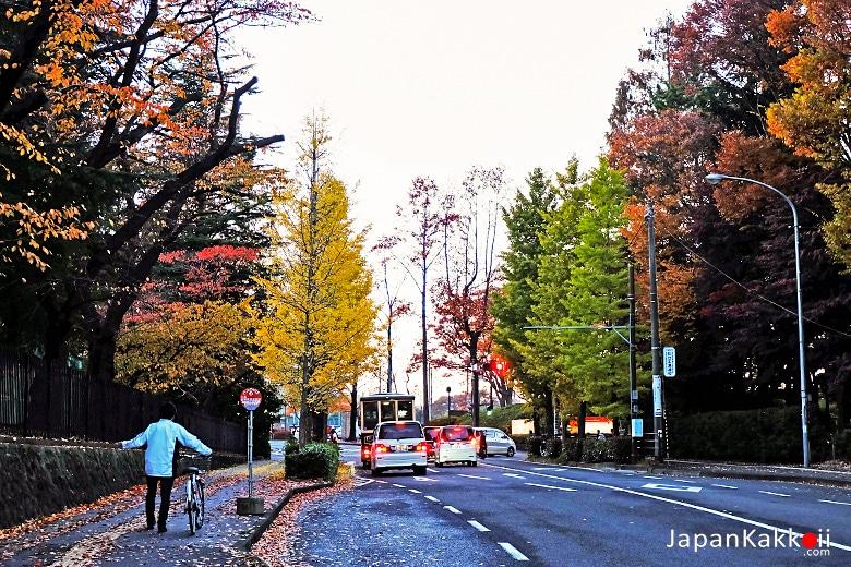 ถนนในเมืองเซนได
