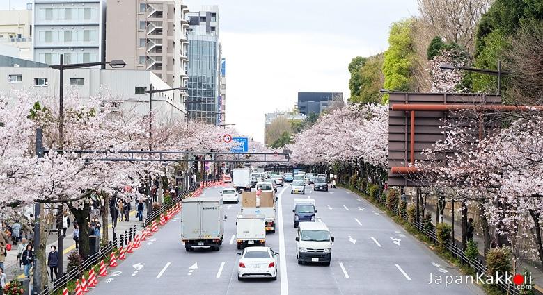 ถนนซากุระ