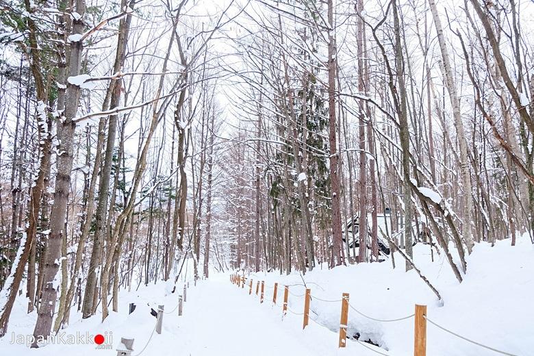 ทางเดินหิมะ