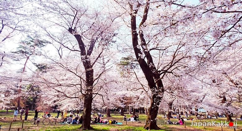 สวนโอมิยะ (Omiya Park / 大宮公園)