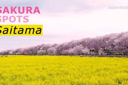 จุดชมซากุระในจังหวัดไซตามะ (Saitama)