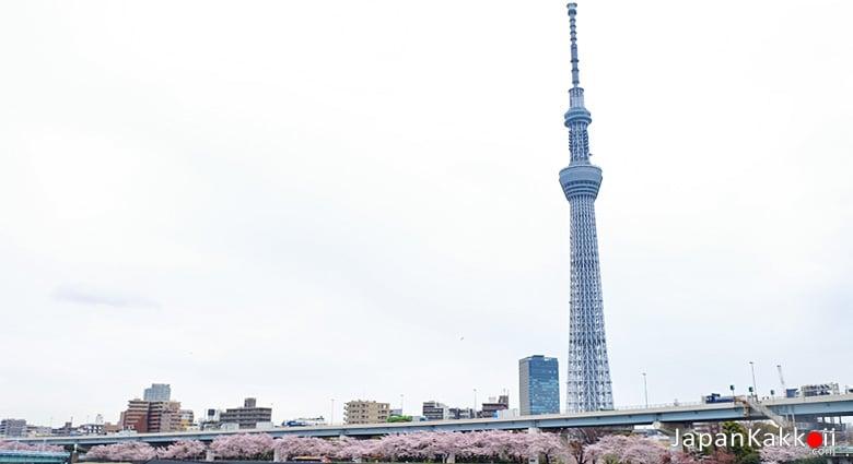 โตเกียวสกายทรี (Tokyo Skytree)