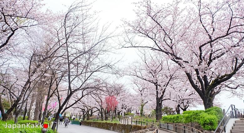 สวนสุมิดะ (Sumida Park)