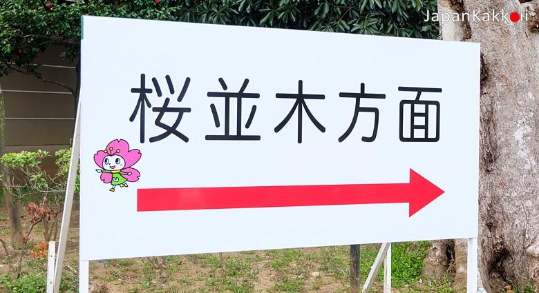 ป้ายบอกทางไปโซนชมซากุระ