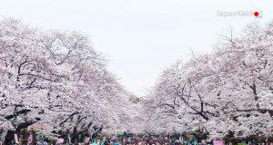 ซากุระที่สวนอุเอโนะ (Ueno Park)