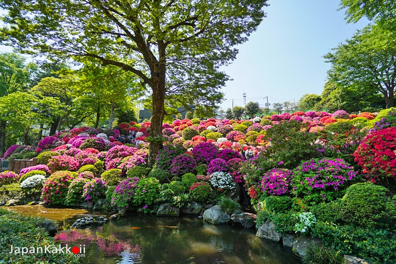 สวนดอกซึซึจิ