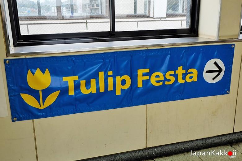 Tulip Festa