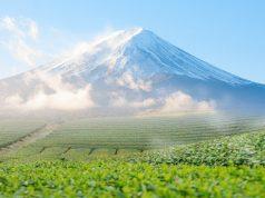 ชาเขียวและภูเขาไฟฟูจิ