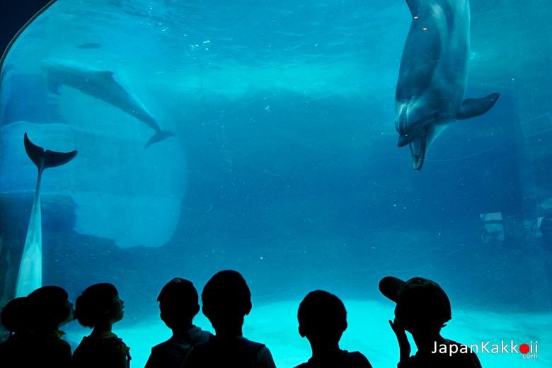 โลมา (Dolphin)