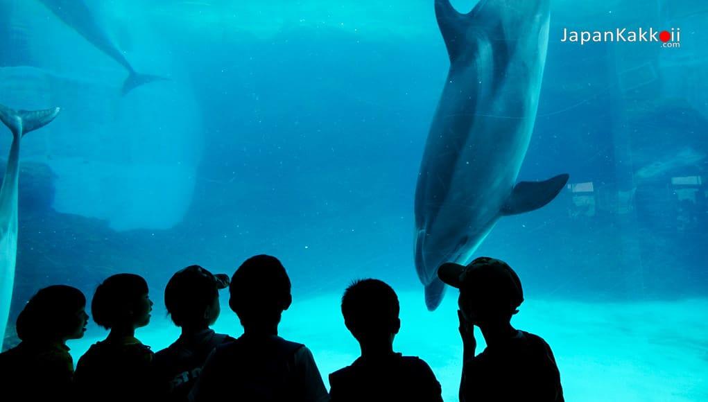 พิพิธภัณฑ์สัตว์น้ำท่าเรือนาโกย่า (Port of Nagoya Public Aquarium)