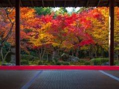 จุดชมใบไม้เปลี่ยนสีจังหวัดเกียวโต (Kyoto)