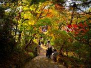 จุดชมใบไม้เปลี่ยนสีจังหวัดฟุกุโอกะ (Fukuoka)