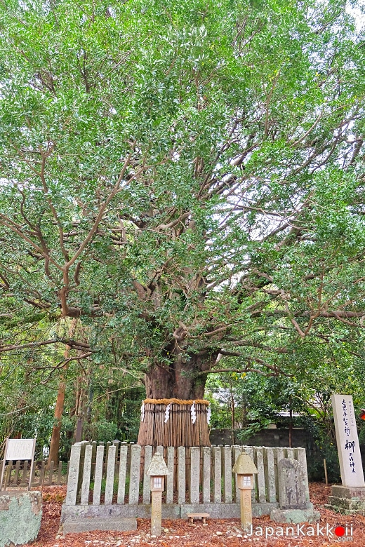 Nagi no Ki (梛の木)