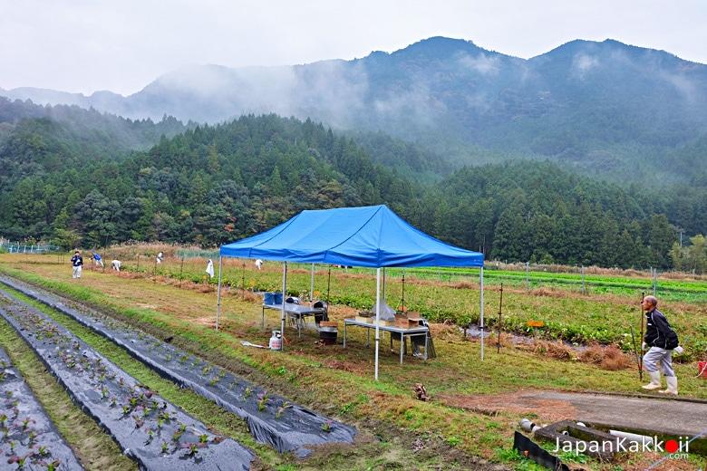 ฟาร์มมันหวานย่านชานเมืองชินงู (Shingu)
