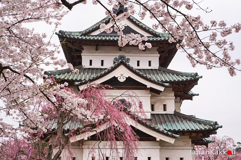 ปราสาทฮิโรซากิ (Hirosaki Castle Honmaru)