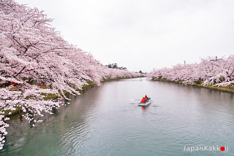 ซากุระริมคูน้ำ