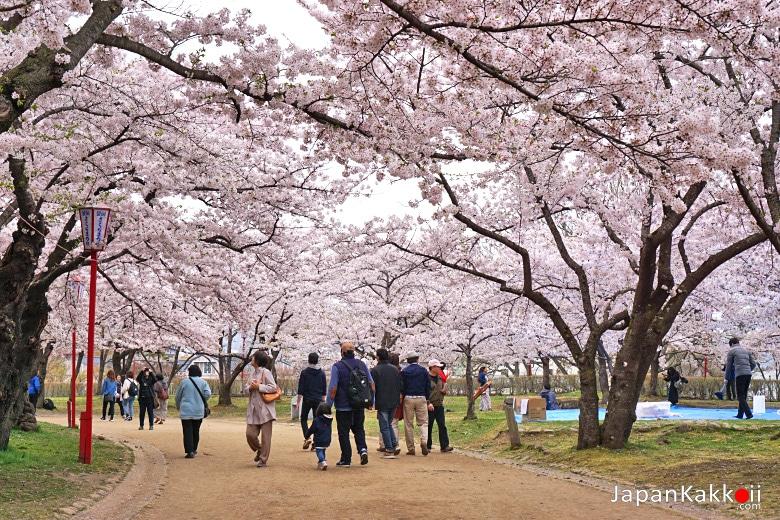 สวนปราสาทโมริโอกะ (Morioka Castle Site Park หรือ Morioka Castle Ruins / 盛岡城跡公園)