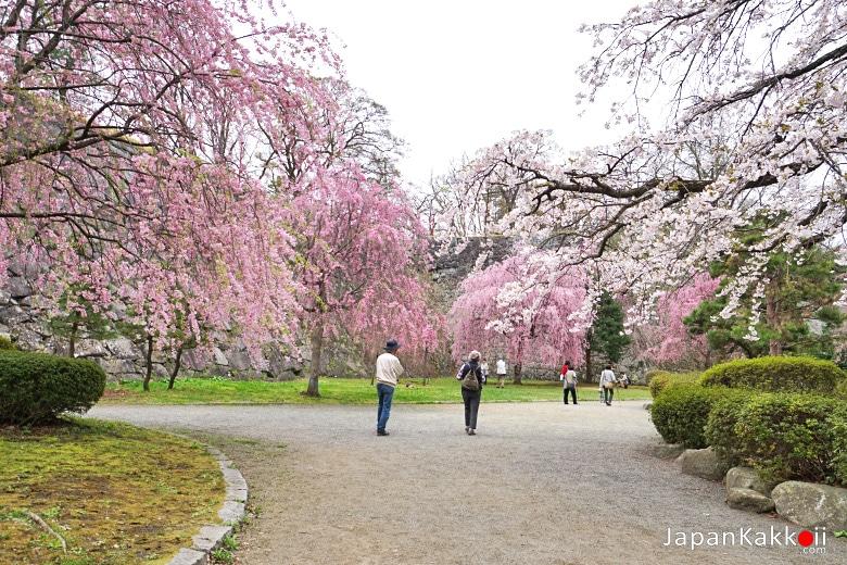 Morioka Castle Site Park Sakura