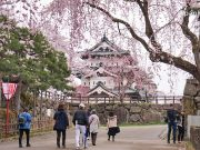 ซากุระปราสาทฮิโรซากิ (Hirosaki Castle)