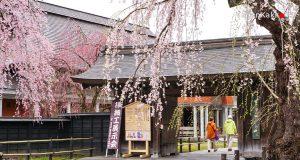 หมู่บ้านซามูไร คะคุโนะดาเตะ (Kakunodate Samurai District)