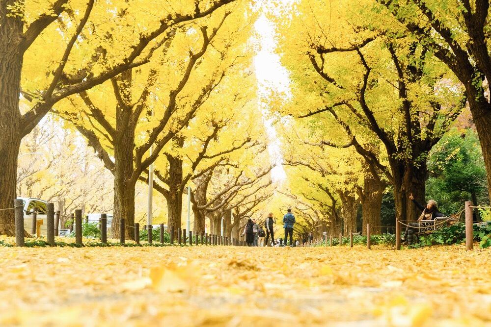 1. สวนเมจิ จิงกุ ไกเอน เมืองโตเกียว (Meiji Jingu Gaien Park)